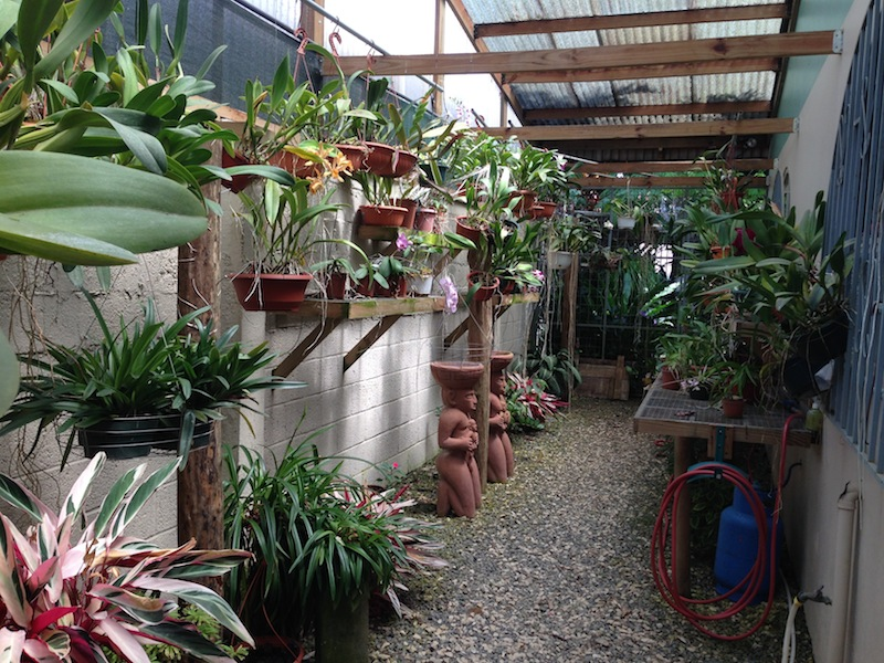 3-orchid-nursery-north